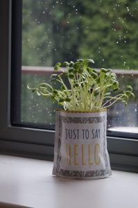 Shroot growing greetings on a window sill